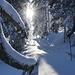 Aufstieg durch den winterlichen Märchenwald