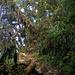 Weg durch Bergnebelwald