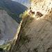 Mulis kommen auf schmalem Weg in brösligem Sandstein entgegen