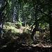 Im Aufstieg zum Mahya Dağı - Durch schönen Bergwald.