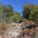 """Im Aufstieg zum Mahya Dağı - Hier ist das """"Buschland"""" zur Abwechslung mal etwas offener."""