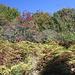 Im Aufstieg zum Mahya Dağı - Umgeben von dichtem Farn, Gebüsch und kleinen Bäumen.