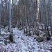 Aufwärts durch den Wald.