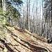 Rückweg durch den Wald.