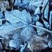Herbstblatt im eisigen Talgrund