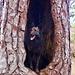 ... klar, du darfst dich auch ablichten lassen in dem hohlen Baum ... ;-)