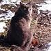 In Stettbach lief ich einfach los, bergauf. Wenig später traf ich diesen schönen grauen und schon älteren Kater, der sich freute. Er freute sich über die Sonne, über mich, über mein Handy und über das erste Freilandgras seit drei Wochen. Denn vorher war alles mit Schnee bedeckt.
