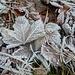kaum Schnee - doch viel Frost