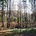 Gepflegte Mischwälder