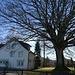 Prachtvoller Baum im Vorgarten