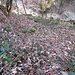 """Weil auf hikr nicht ganz klar ist, wie Klettern im Wald bewertet wird und so, machen wir hier einen kleinen Einschub zum Thema <br />""""Klettern im Matsch - Welcher Pflanze kann ich trauen?"""""""