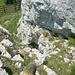 Die Schlüsselstelle von oben. Für den Abstieg ist die T6 / Fels II+ - Stelle nicht zu empfehlen.