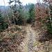 aus dem breiten Waldweg wird ein schmalerer Pfad
