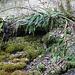 Farne und Moos unterhalb von Tüfels Chilen