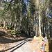 200m Laufen im Wald ist angesagt