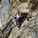 Kletterkunst II