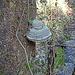 Pilz oder Mütze?