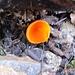 sogar ein oranges Fundstück