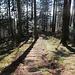 malerischer Waldabstieg ...