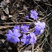 Frühlingserwachen im Tessin