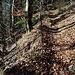 Waldpfad.