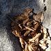 Blätter im Steinbett.