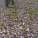 Versammlung der kleinen Waldtrolle.