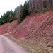 Oberhalb von Hasel verlässt der Westweg die Kalkbänke und durchquert den Buntsandstein. Vor Schweigmatt erreicht man dann das Grundgebirge. 100 000 Jahre Erdgeschichte in wenigen Minuten durchwandert.