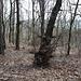 """(99) Der Ausblick von BANK 34  Noch kann man im Hintergrund einige Landschaftskonturen erahnen. Wenn die Bäume demnächst aber wieder Laub tragen, ist die """"Ríšova lavička"""" allerdings noch weniger reich an Aussicht."""