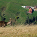 Anhand des Bauernhofes kann man erahnen, in welch steilem Gelände sich die Steingeiss befindet.