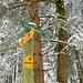 wir folgen im (Mittler) Toppwald dem Studermöösliweg ...