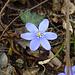Primavera in arrivo