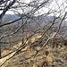 La cima del Chiusarelletta, ormai invasa dalla vegetazione.