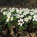 Belle fioriture nei boschi del Parco di Monza.