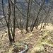 Il pascolo sospeso dell'Alpe Ronchetto