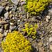 Blumenkissen zieren die sonst öde Steinlandschaft