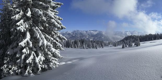 Das Wald-Wild-Schongebiet Obere Kierwanger Alpe