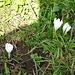 Der Frühling hält Einzug in Niederrickenbach.