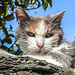 Eine Katze in Carona