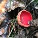 "seltener, auffälliger, Pilz am Wegrand; natur-lexikon.com meint: ""als ausgesprochen schöne Seltenheit schützenswert"""