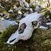 Im Urwald der Barbagia. Ein weiteres Opfer.