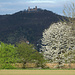 Blütenbaum vor Schloß Auerbach