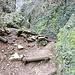 Steiler Abstieg vom Südrand des Reculée über die Echelles de Crançot zum Talboden.