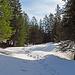 """dann geht es mehrheitlich wie auf diesem Bild im Schnee hinauf in Richtung dem Schillersattel, hier hatte es ca. 50 cm Schnee mit tiefen Wegspuren, die mich teilweise """"noch getragen"""" haben."""