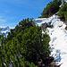 weiter geht der Wanderweg zwischen Latschenkiefer hindurch und genau auf dem Weg zog sich meistens ein Schneeband durch, ca. 60-80 cm tiefen Schnee und teilweise noch mehr