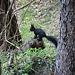 Neugieriger Waldbewohner auf dem Wanderweg nach Fly