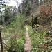 Das Wegstück zum Forsthaus ist schön angelegt.