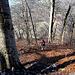zu weit links im steilen Wald gelandet.