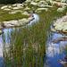 Die Tümpel in der Moorlandschaft unterhalb der Sieben Hengste sind nach den Niederschlägen der vergangenen Tage gut gefüllt.