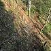 eine kurze Stelle bei Steinwänd ist sogar mit Seilen gesichert